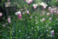 20100928 (zyker - no more) Tags: park orchid mamiya kodak c malaysia kuala 90mm taman lumpur perdana tasik 160 rb67 sekor ektacolor ƒ38