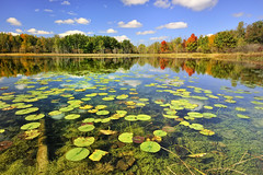 """Autumn Calm""  Brockway Lake, Lower Michigan (Front page Explore # 5 Sept 28, 2010) (Michigan Nut) Tags: autumn trees light usa lake color green art nature clouds landscape geotagged photography photo moss fishing pond photos bass michigan fallcolors bluesky september autumncolors explore cattails marsh mapletree nut lilypads recent placid clearwater calmwater michiganlake orangeleaves fallreflections frontpageexplore d700 sunkenlog michigannut brockwaylake nikon1635mmf4g"