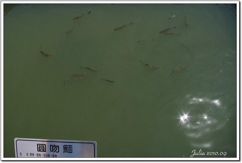 八甲魚場 (9)