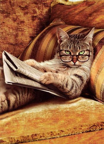 氣質看書貓