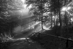 the light (crazyhorse_mk) Tags: wood morning trees bw sunlight nature fog forest canon germany way landscape blackwhite track sw baden schwarzwald blackforest soundtrack sunbeams schauinsland badenwuerttemberg wishboneash eos400d timewas