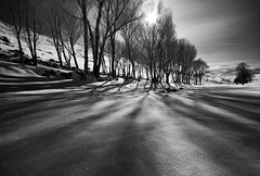 ( Ali Shokri / www.alishokri.com) Tags: trees winter light bw sun snow nature landscape shadows iran azerbaijan tabriz alishokri