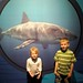Sea Life Aquarium - George, Allie, Great White