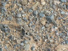 Lizard near Juulchin Gobi 2 (jayselley) Tags: park three nationalpark asia september mongolia national beauties exodus 2010 mongol gurvan gurvansaikhan threebeauties saikhan mongolianadventure