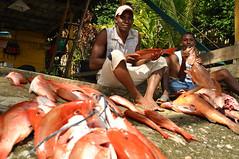 Un da de pesca en Nuqu (Nataliagoca) Tags: sea sun tourism sol beach colombia pacific afro selva playa el jungle cantil humpback turismo embera pacfico ballenas choc jorobadas yubartas
