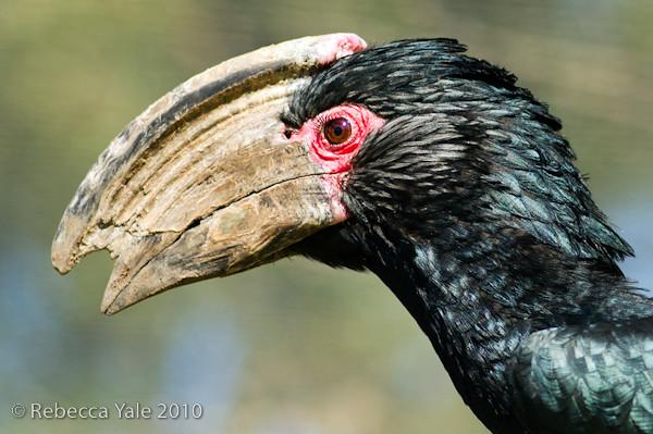 RYALE_African_Dawn_Birds_46