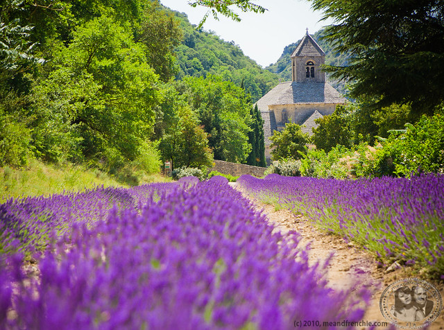 Lavender Field At Senanque Abbey