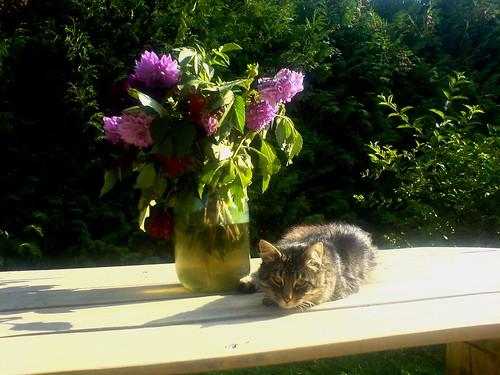 Sunny cat day