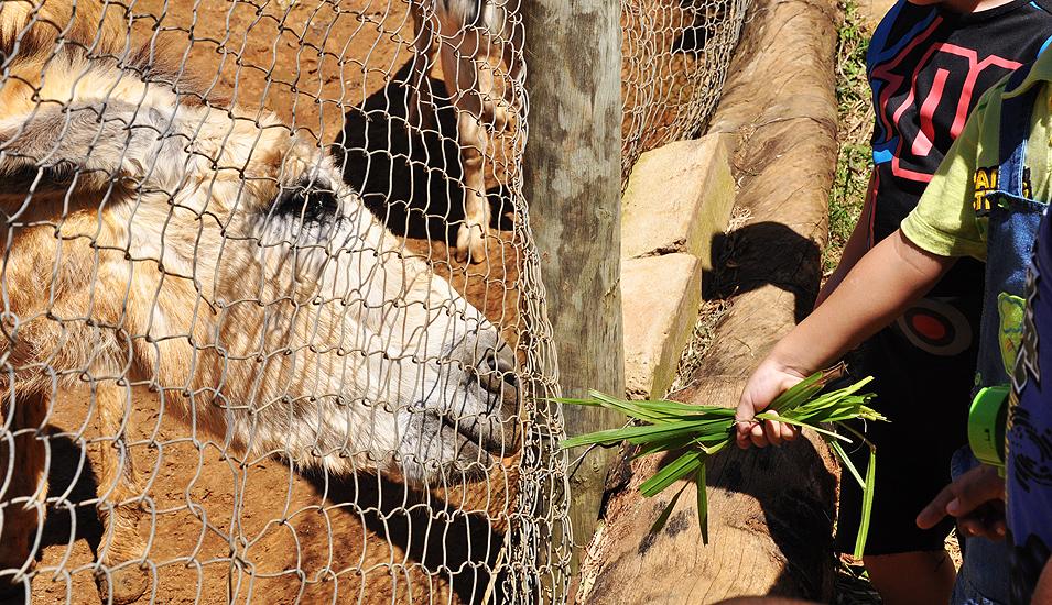 soteropoli.com fotografia fotos de salvador bahia brasil brazil 2010 zoo zoologico by tuniso (11)