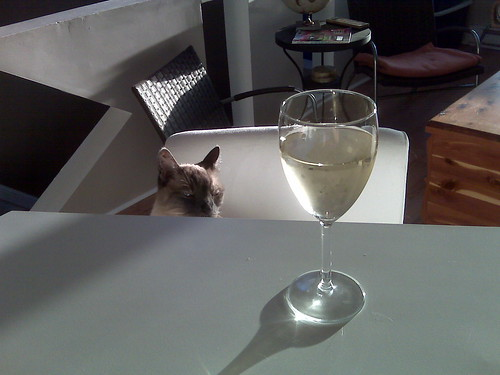 Still life with cat and Chenin Blanc