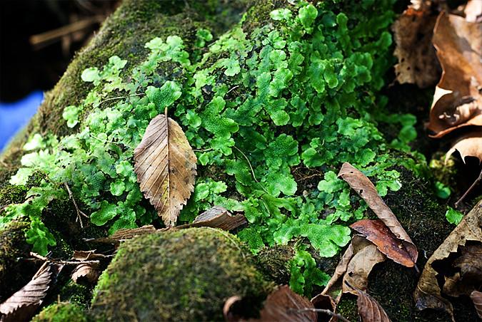nature walk 10-8-10 (2)