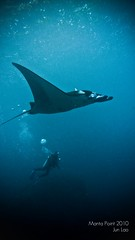 dwarfed (PaparazSea ) Tags: travel mantaray balidiving mantapoint junlao panasoniczs3
