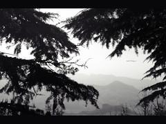 Behind (Isabel Rodrguez) Tags: blanco arbol san italia negro montaa niebla marino pais mywinners