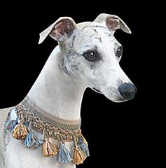 vaidoso (ComTradio) Tags: ribbons trims gales sirgaria martinhoealmeida