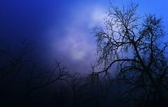 Silent Rise (MJ ♛) Tags: blue public silhouette canon garden eos silhouettes 7d 1855mm rise efs qatar 2010 alkhor قطر الخور