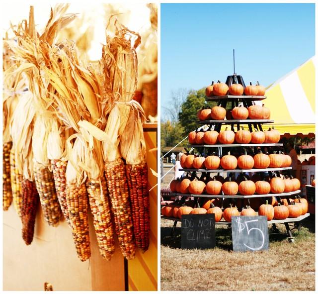 corn.pumpkins