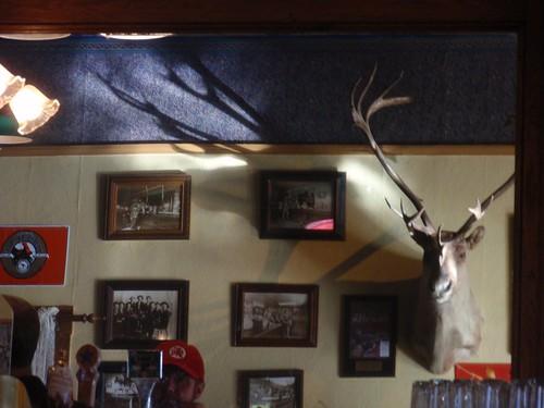 Nort Coast Elk 03