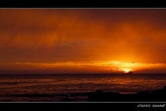 classic sunset (Eric 5D Mark III) Tags: ocean california sunset sky cloud seascape color reflection bird beach water silhouette landscape sailing ship yacht dusk seagull dramatic atmosphere orangecounty tone lagunabeach ef24105mmf4lisusm