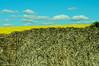 pintura (nachoizu) Tags: azul amarillo cielo nubes campo fields cielos camioneta balcarce fardos sierreas estanciera colzas