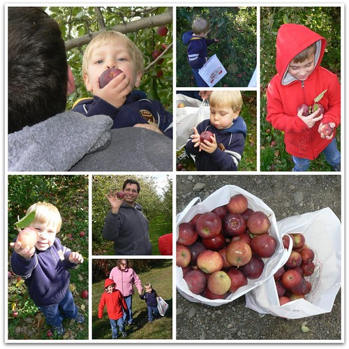 Picking lots of apples