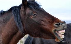 October 17, 2010 - Wild horse near Cold Creek, Nevada (xLimited.Editionx) Tags: cactus horses horse nevada joshuatree yucca wildhorses wildhorse yuccaplant coldcreek coldcreeknevada