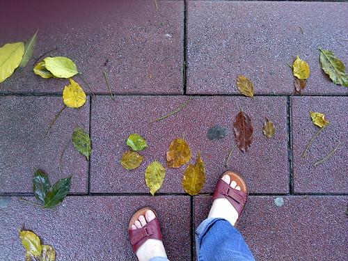 信義計畫區的秋天