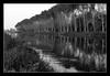 Silenziosa processione... (*kikka83*) Tags: trees blackandwhite bw tree alberi bn reflexions biancoenero trasognoerealtà circolofotograficopaullese nikonflickraward 4tografie collectionofmarvelousworks