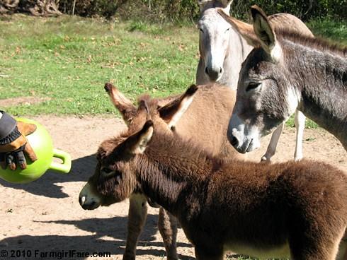 Donkey Ball 11