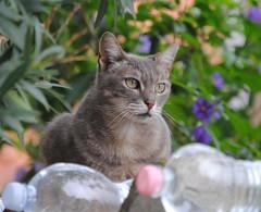 in cerca di preda (scattomatto56 (one million visitors)) Tags: animals chat gatto animale tripleniceshot