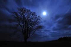 [フリー画像] 自然・風景, 樹木, 月, 夜空, ブルー, 201011092300