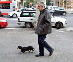IT10ABJ Rome Street Dachshund Walker, Italy 2010 (CanadaGood) Tags: morning people italy dog rome color colour roma car fashion animal person italian automobile europe italia parking vehicle streetphoto 2010 canadagood thisdecade