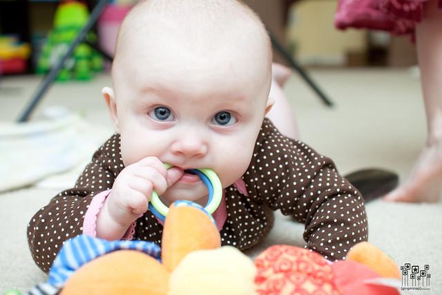 chew toy4