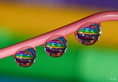 Nevena Uzurov - Clews (Nevena Uzurov) Tags: light color macro water composition droplets drops waterdrop colorful serbia straw vivid drop refraction droplet clews vojvodina srbija вода nevena макро sremskamitrovica srem србија светло боја venkane невена војводина nevenauzurov срем кап сремскамитровица невенаузуров капљица композиција рефракција обојено likeyarn клупче
