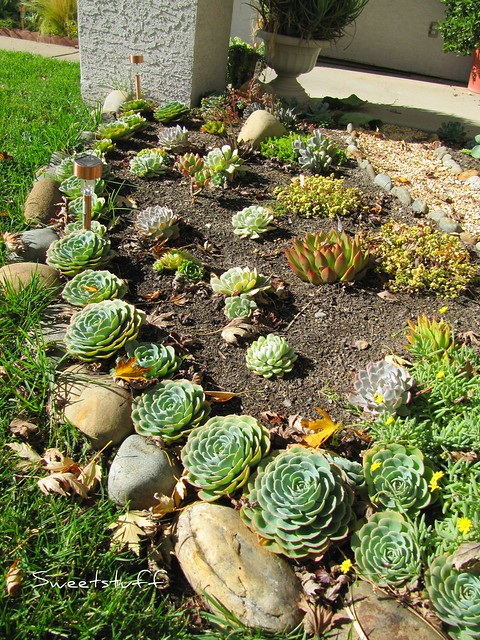 A view of the echeveria section