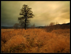 Sudetes / Sudety / Brama Lubawska (Rantes) Tags: trees landscape wind cloudy meadow sudety widok longexpousure drzewa łąka wiatr krajobraz sudetes lowersilesia ponuro pejzaż dolnyśląsk lubawka długaekspozycja pochmurny bramalubawska