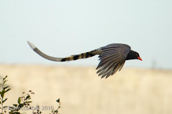 RYALE_Shaanxi_Birds_9