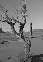 Monument Valley (tramsteer) Tags: usa landscape utah navajo monumentvalley nikond300 tramsteer