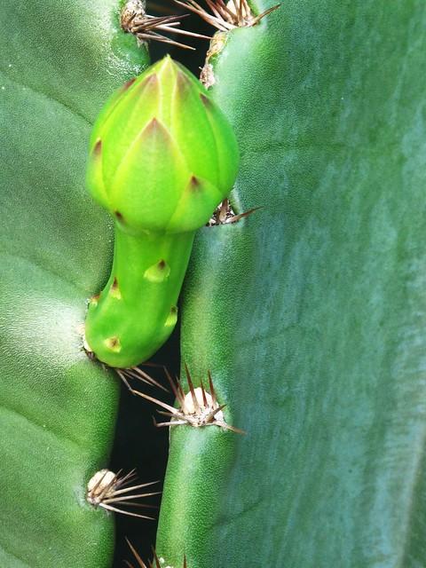 IMG_1699 Cactus