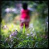 (19/77) Tags: slr film grass malaysia 1977 negativescan kiev88 mediumfromat kodakektacolorpro160 autaut canoscan8800f arsat80mmf28 myasin