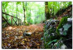 aspettando un nuovo domani (ROSSANA76 Getty Images Contributor) Tags: verde foglie alberi ombra natura marroni roccia sentiero muschio pietra autunno fresco bosco edera percorso gialle steccato secche