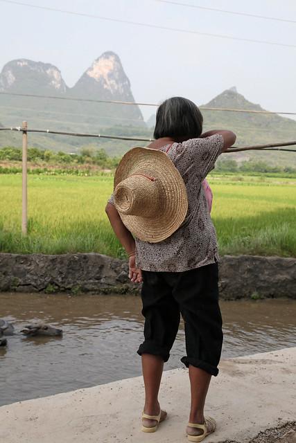 A woman and swimming buffaloes in Yangshuo, Guangxi, China