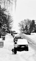 Winter Time... (Sherlock77 (James)) Tags: street winter people dog snow tree calgary car