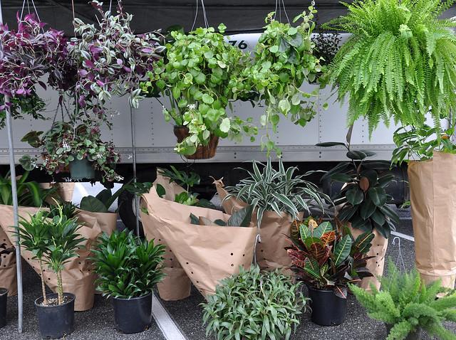 LB.plants