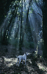 Lady en el bosque 2 (osvaldodechile) Tags: en el bosque perros brumas perrosenelbosque