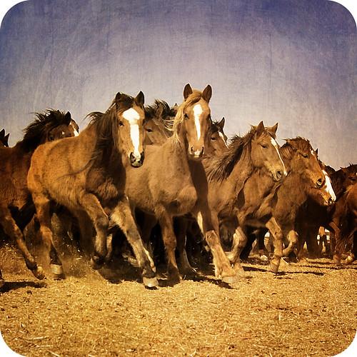 horses squared