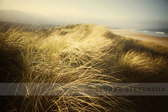 Sand dunes. (Stuart Stevenson) Tags: light beach nature 50mm sand waves tide naturallight coastal northernireland grasses seashore sanddunes shallowdepthoffield marramgrass northatlanticocean shallowfocus northantrim whiteparkbay ammophila rustle canon5dmkii ©stuartstevenson breezefog