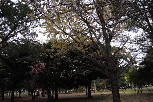 Autumn at Yoyogi Park