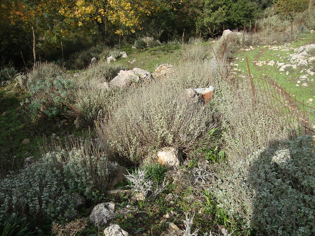 herbs kambi