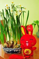 Happy Bunny 笑口常開
