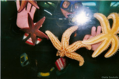 Under the sea. (Olalla Esquimal) Tags: camera boy sea man film yellow 35mm de mar grove starfish bajo under retro galicia galiza amarillo catamaran estrellas pelicula diver camara hombre disposable analogic oxigeno analogico desechable buceador agostoesquiimal